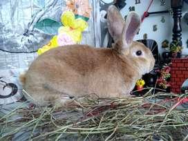 Vendo conejos en Bogotá