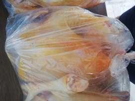 Pollos amarillos criados en casa
