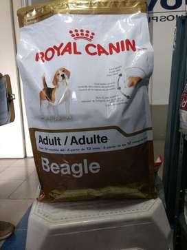 Adult Beagle  $81.000 Negociables
