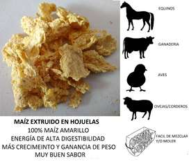 Maiz extruido Medellin