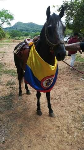 Vendo hermoso caballo