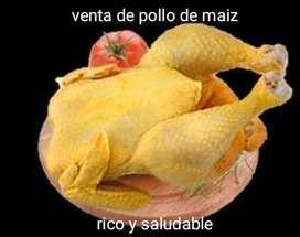 Venta de pollo de maíz