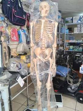 Modelo anatómico ESQUELETO HUMANO