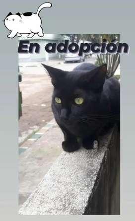 Gata para adopcion