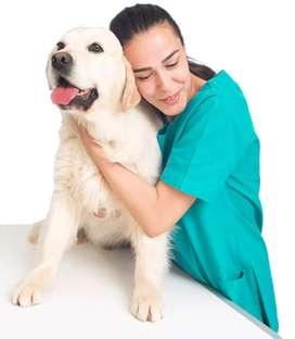 Busco instructor para curso virtual de veterinaria