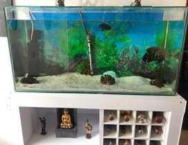 Vendo acuario con mueble o solo