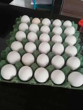 Cachama y mojarra y huevo