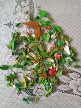 Hojas o follaje en porcelanicron