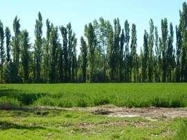 Vendo o permuto 2 terrenos - VISTA ALEGRE NORTE (600m2) CONSULTAR PRECIO