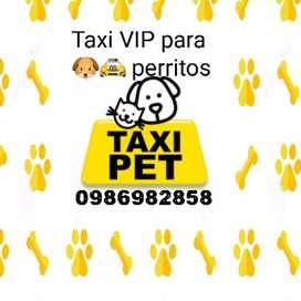 Taxipet taxi VIP para perritos