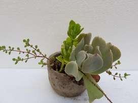 Suculentas y Cactus combinados en maceta de cemento artesanal