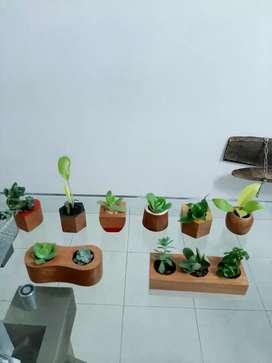 Materos y plantas