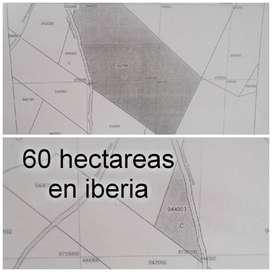 Venta 60 hectareas en iberia