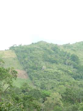Finca de 8,1 Hectareas La Mesa Cundinamarca