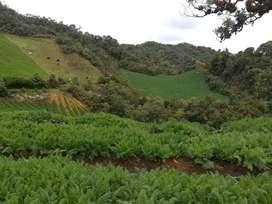 finca de 16 cuadras en la unión Antioquia