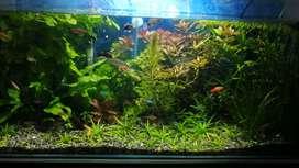 Kit NPK abono para acuario plantados