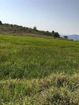 Vendo finca a 5 km de Tesalia Huila