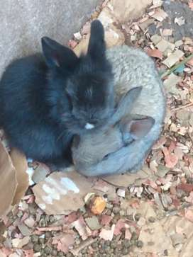 Conejitos bebes