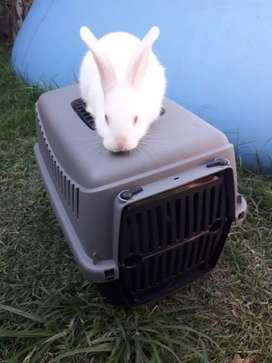 Conejitos bebé. Incluye jaula transportadora +2kg alimento balanceado
