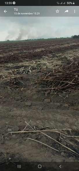 Vendo 2 hectareas y media con cultivo de caña con camino y luz eléctrica
