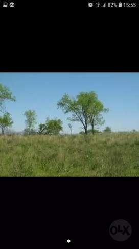 Vendo campo 4 hectáreas en posadas