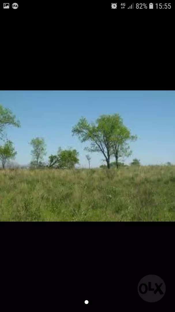 Vendo campo 4 hectáreas en posadas 0