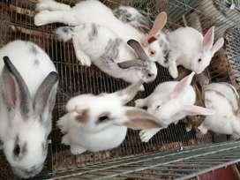 Vendo estos conejos a buen precio y de la mejor calidad