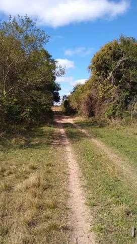 Vendo 70 hectareas entre San Cosme y Ramada Paso, Corrientes.