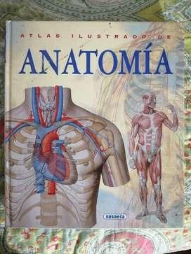 Atlas Ilustrador de Anatomia