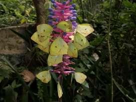 Liberación de Mariposas