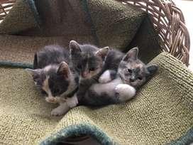 Regalo gatitos bebe !