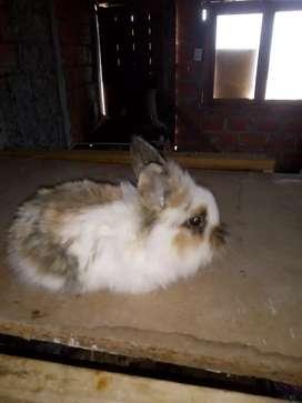 Últimos conejos