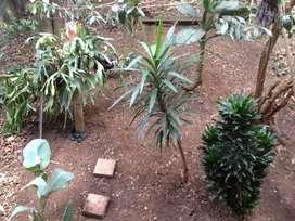 Servicio de jardinería por horas y días