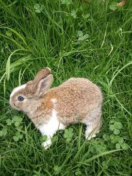 Hermosos Conejos Enanos