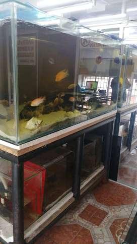 acuario en vidrio