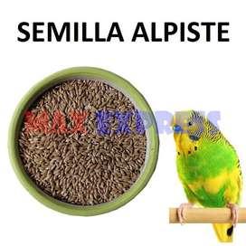 Semilla Alpiste Aves Periquito Canario