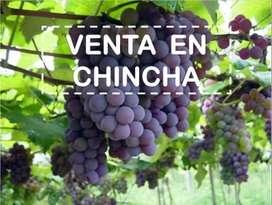 Venta de Uva -Chincha Oferta
