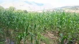 Venta de terreno con riego en el sector La Vega en Catamayo,Loja