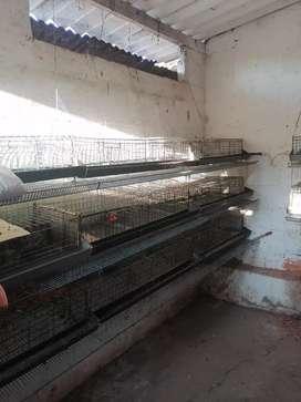 Vendo jaulas para codornices