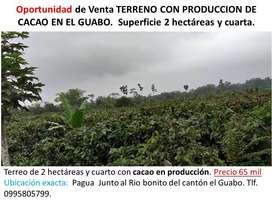Oportunidad terreno en produccion de Cacao