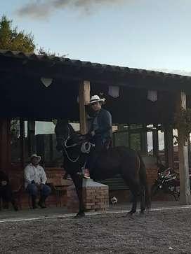 Vendo hermoso caballo de la finca Carrasquilla barato