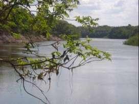 Sobre el Río Bita, HERMOSAS Fincas en el Vichada - La Venturosa, aptas para ganadería, agro-forestales, etc