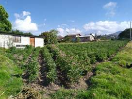Venta de Terreno, Ibarra, Bellavista de Caranqui
