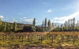 Finca Con Viñedos En San Bernardo, La Rioja