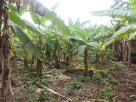 Terreno para uso agrícola