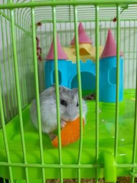 Vendo hamster ruso