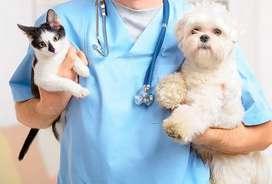 Asesoria veterinaria en casa