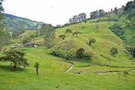 Finca Ganadera - Trujillo Valle