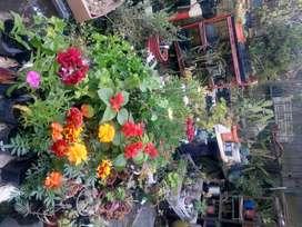 Venta de plantas VARIAS