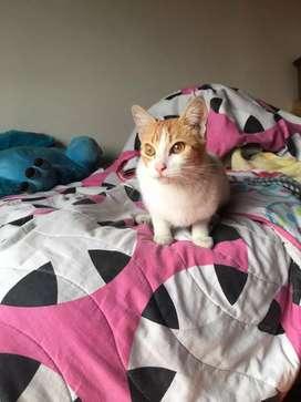 Doy en adopción esta hermosa gatica